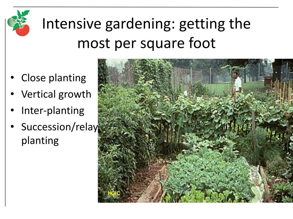 Intensive gardening: getting the most per square foot