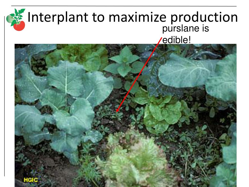 Interplant to maximize production
