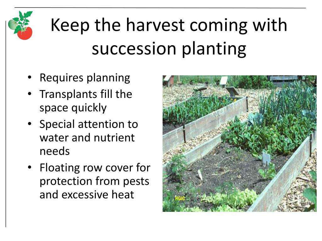 Keep the harvest coming with succession planting