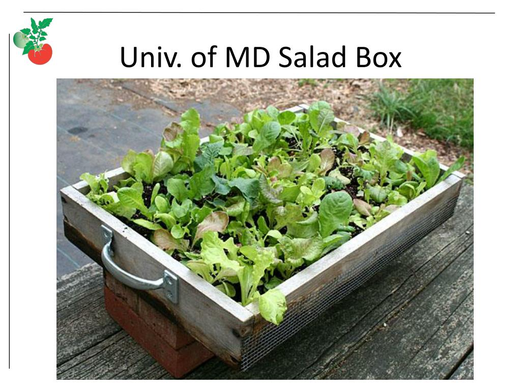 Univ. of MD Salad Box