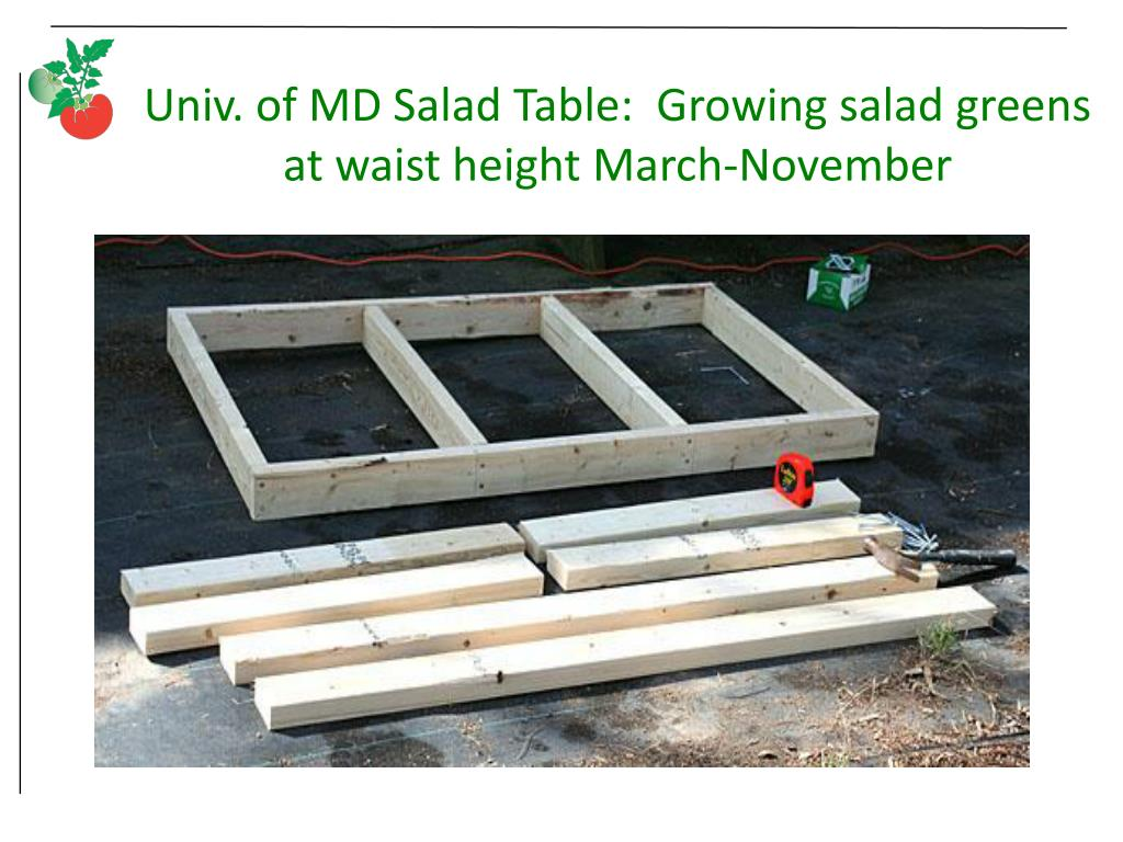 Univ. of MD Salad Table:  Growing salad greens at waist height March-November