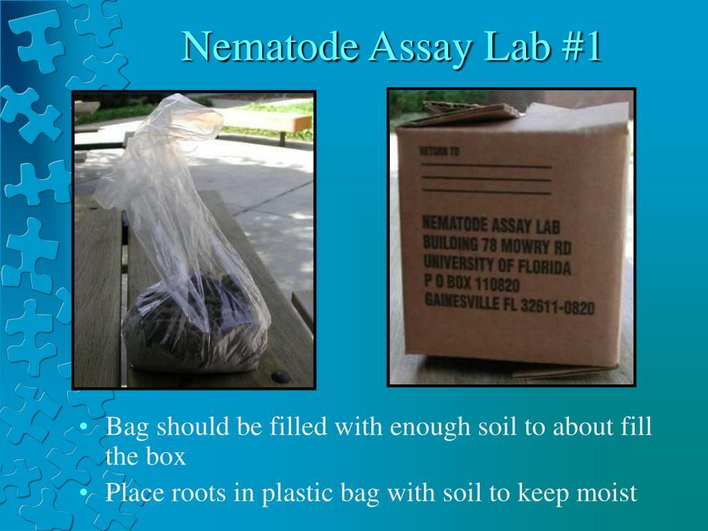 Nematode Assay Lab #1