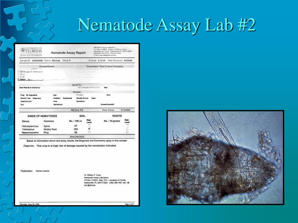 Nematode Assay Lab #2