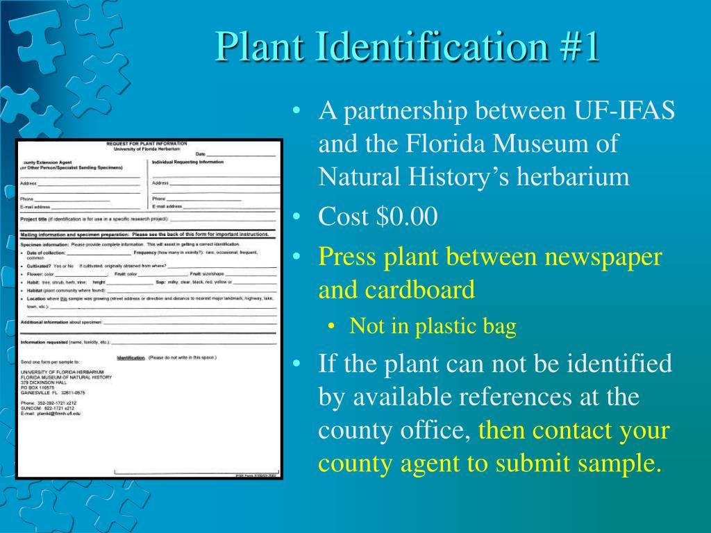 Plant Identification #1