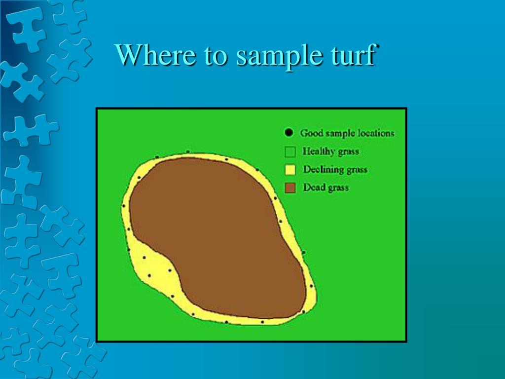 Where to sample turf