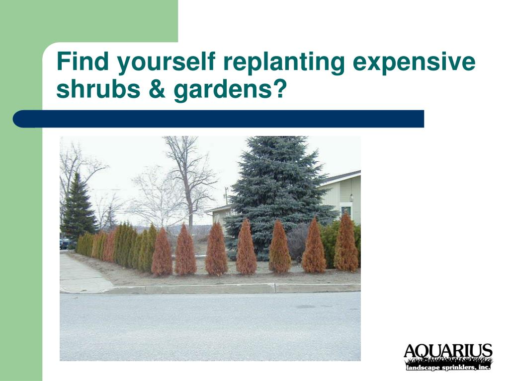 Find yourself replanting expensive shrubs & gardens?