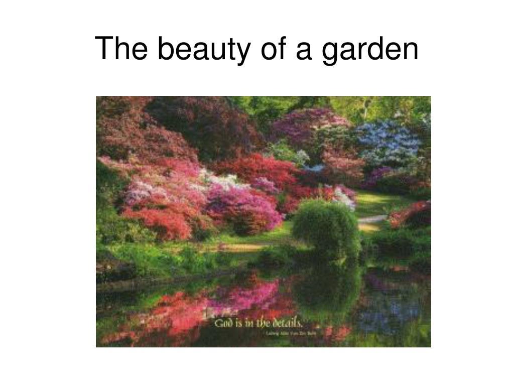 The beauty of a garden