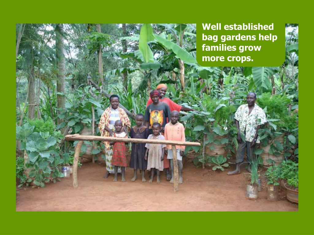 Well established bag gardens help families grow more crops.