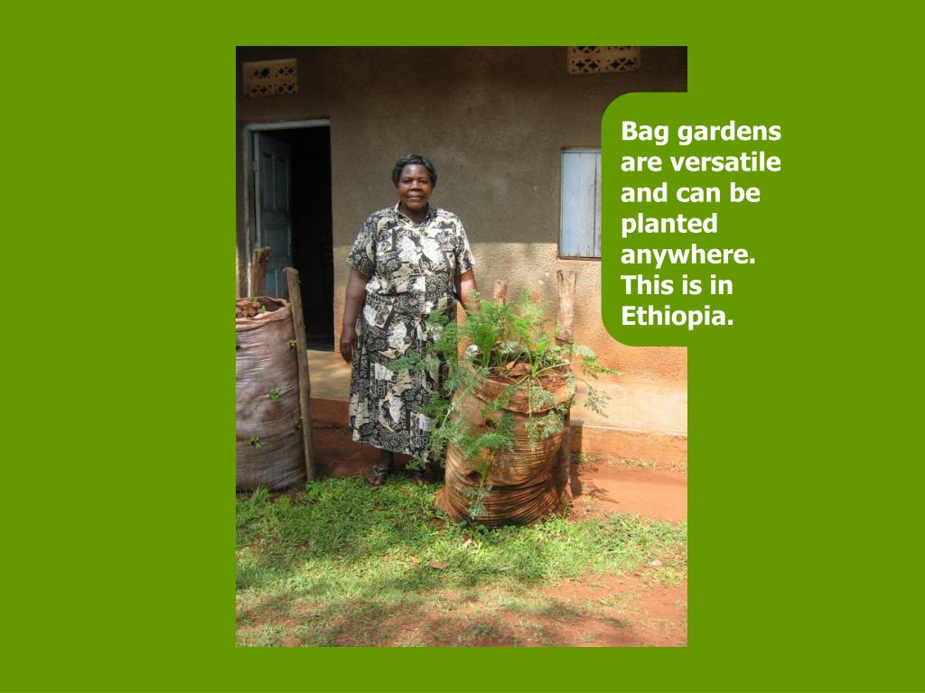 Bag gardens are versatile and can be planted anywhere. This is in Ethiopia.
