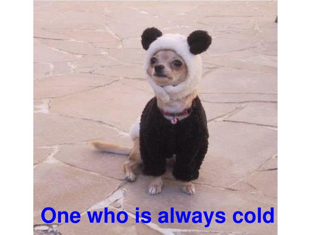 One who is always cold