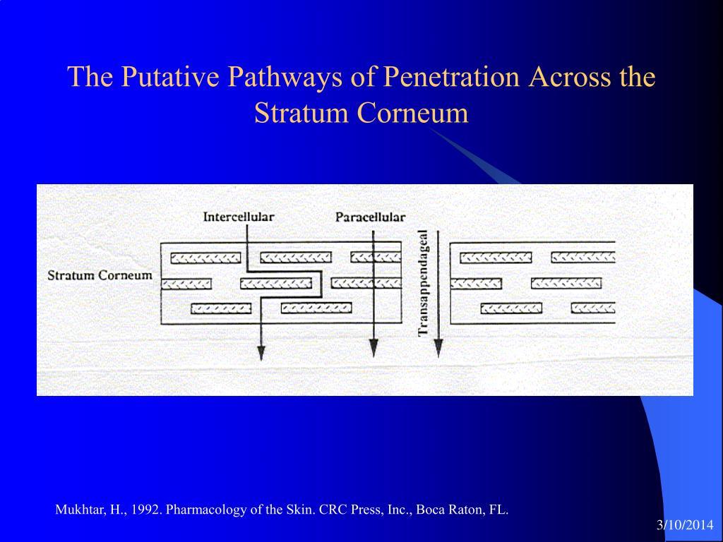 The Putative Pathways of Penetration Across the Stratum Corneum