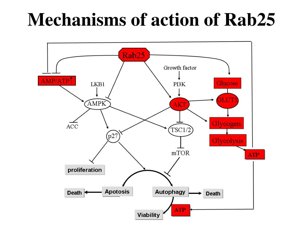 Mechanisms of action of Rab25