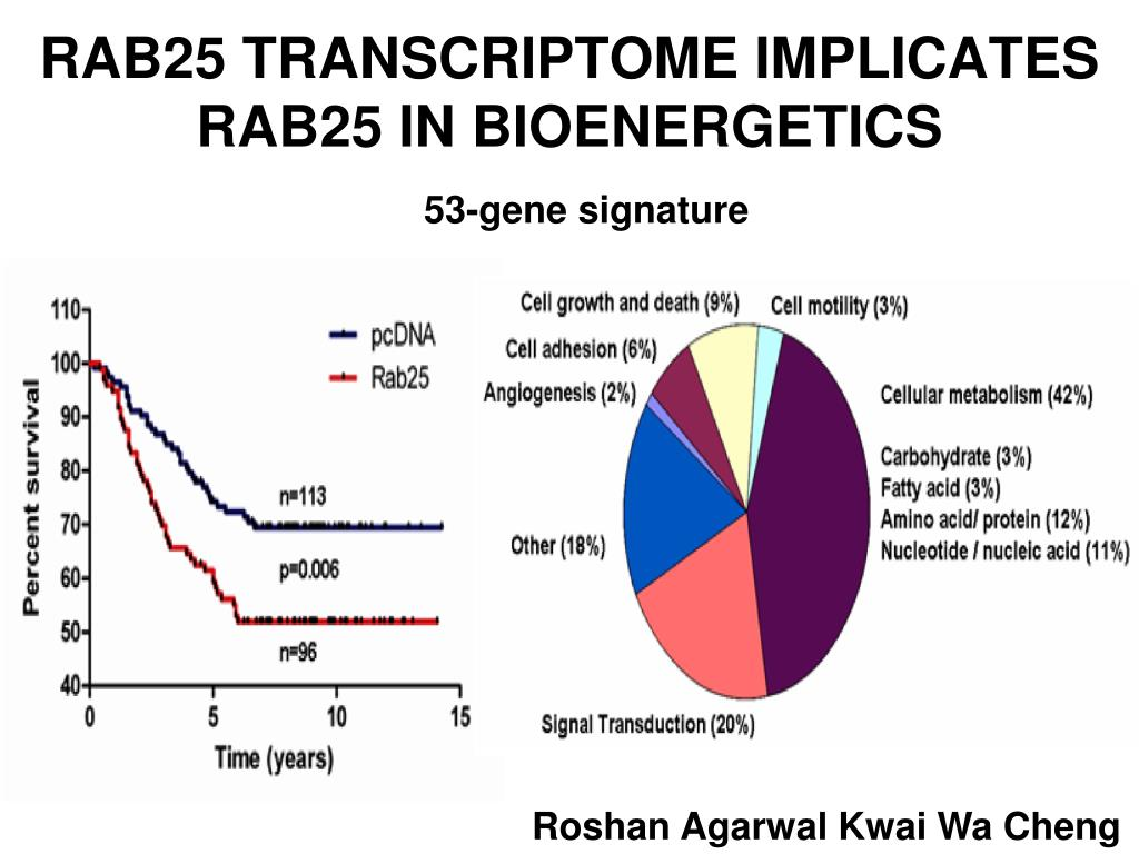 RAB25 TRANSCRIPTOME IMPLICATES RAB25 IN BIOENERGETICS