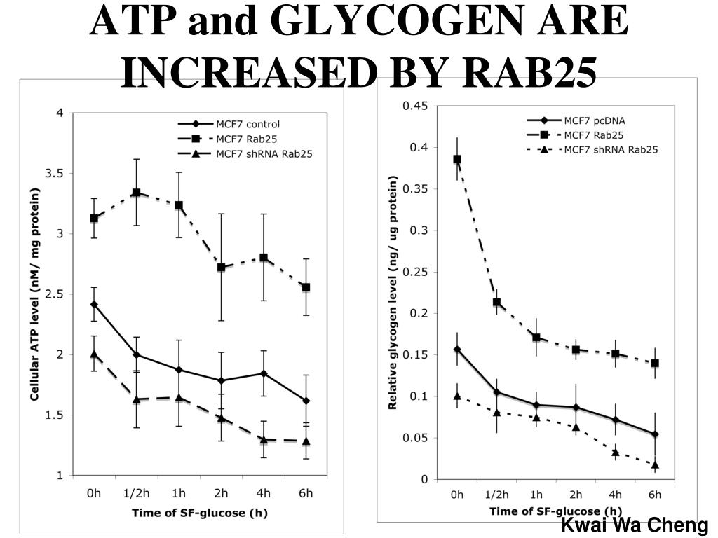 ATP and GLYCOGEN ARE INCREASED BY RAB25