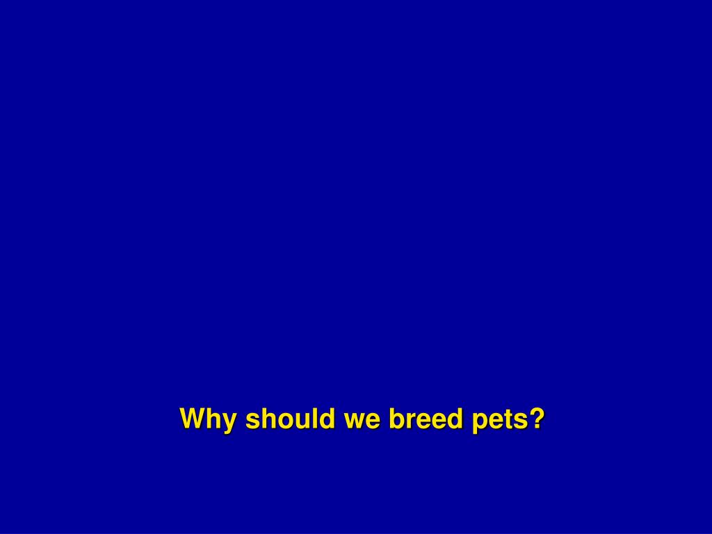 Why should we breed pets?