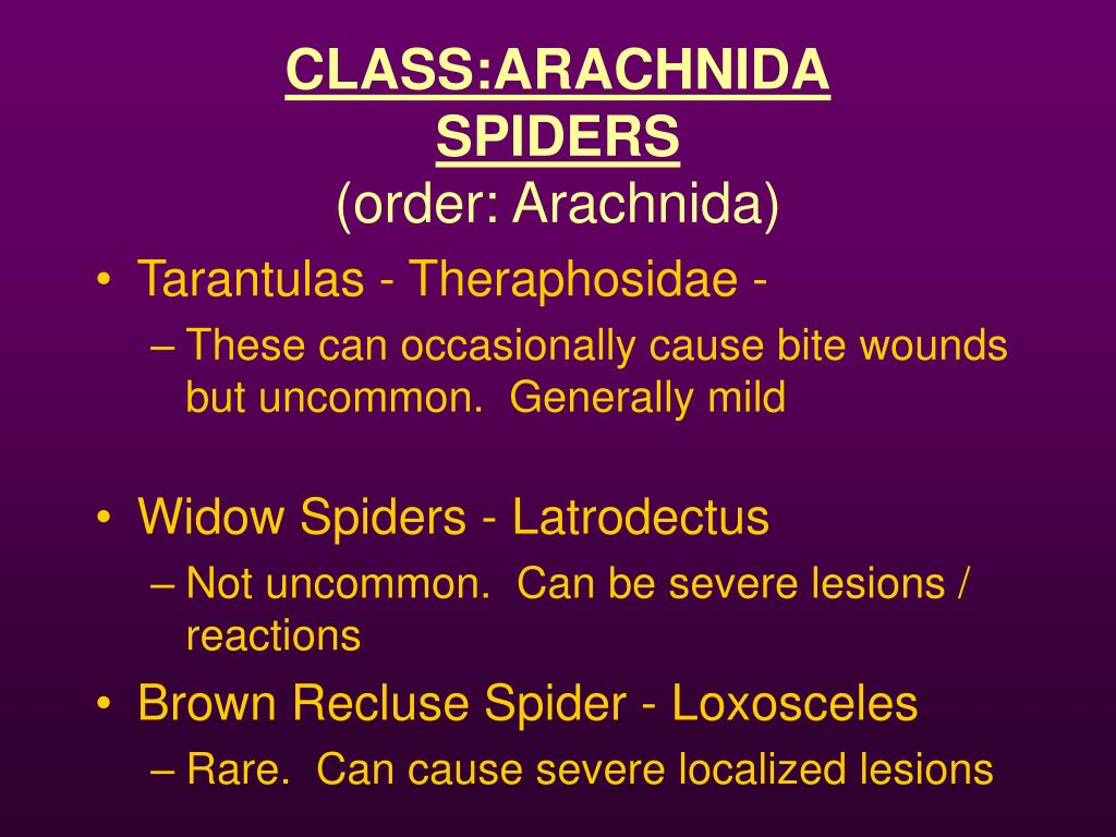 CLASS:ARACHNIDA