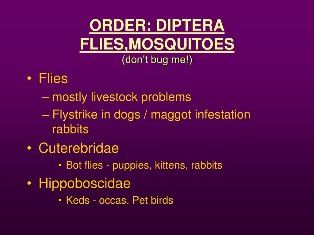 ORDER: DIPTERA