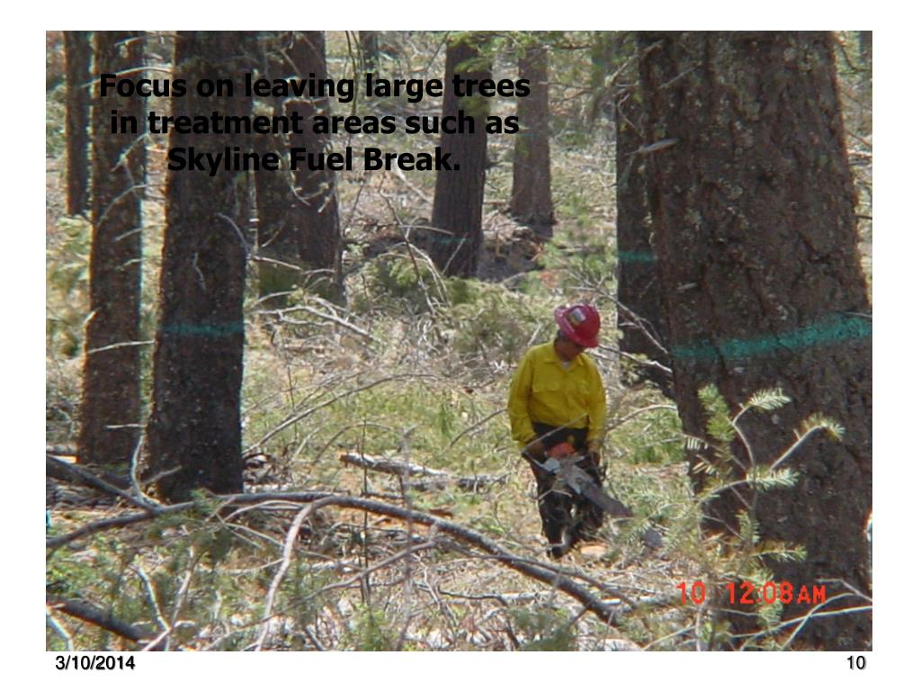Focus on leaving large trees in treatment areas such as Skyline Fuel Break.