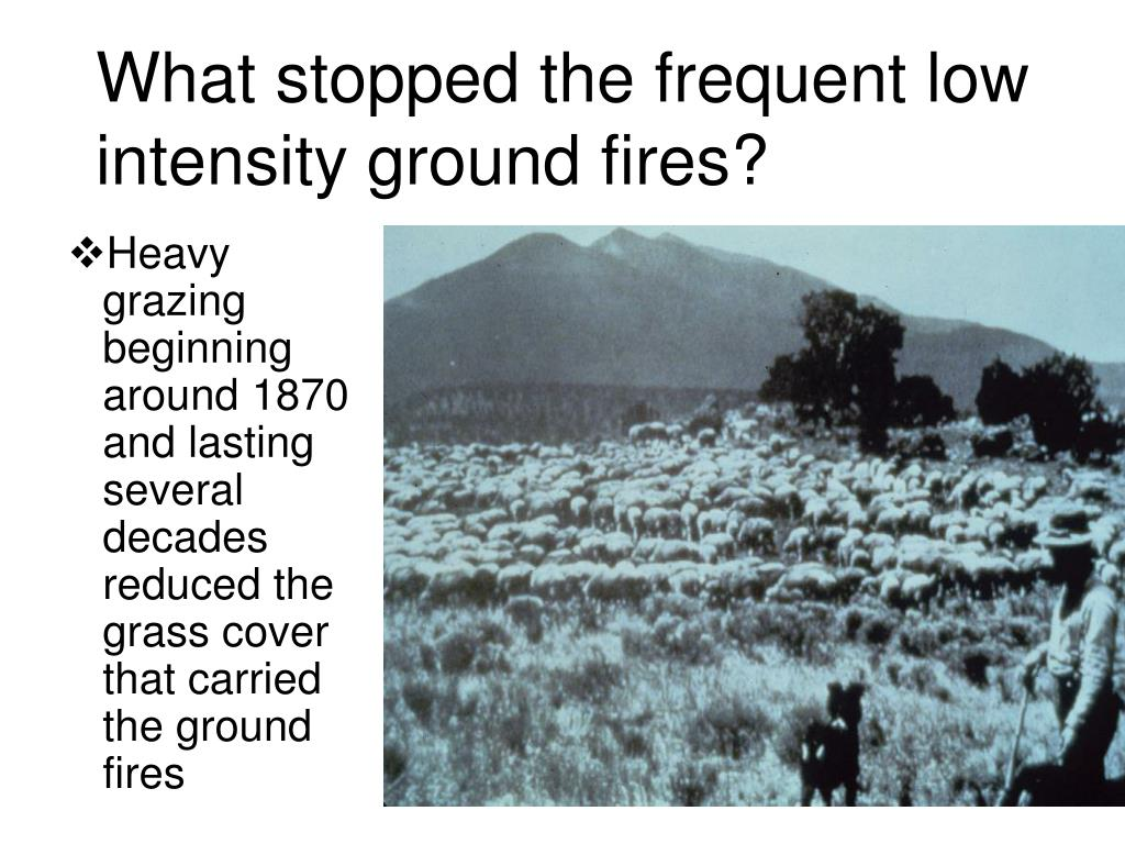 What stopped the frequent low intensity ground fires?
