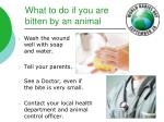 what to do if you are bitten by an animal