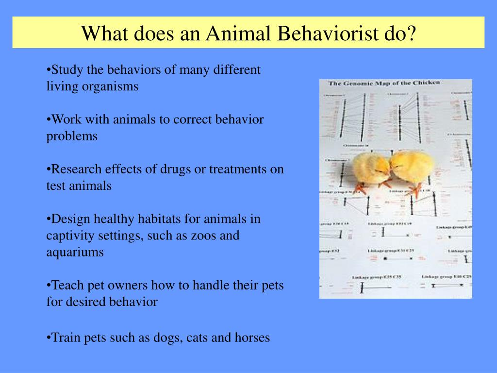 What does an Animal Behaviorist do?