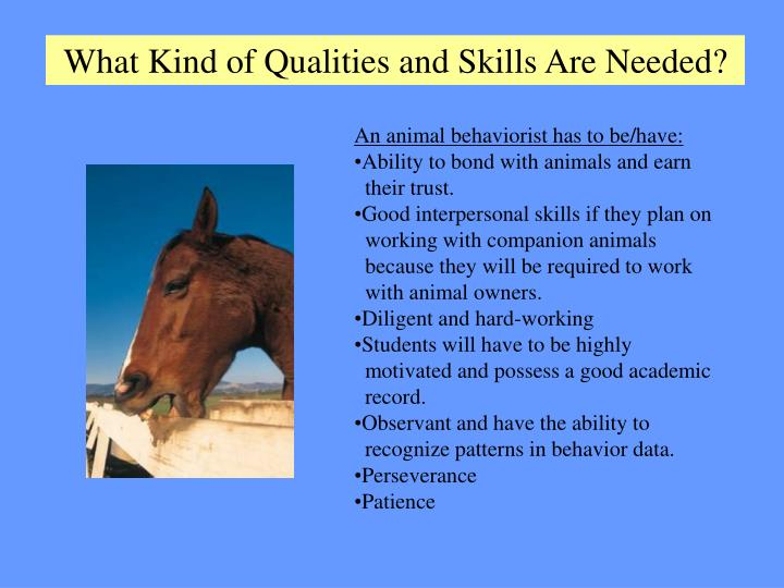 What Kind of Qualities and Skills Are Needed?