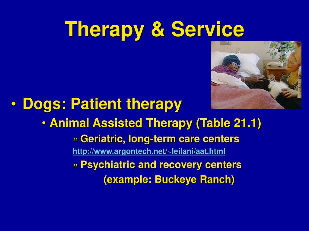 Therapy & Service