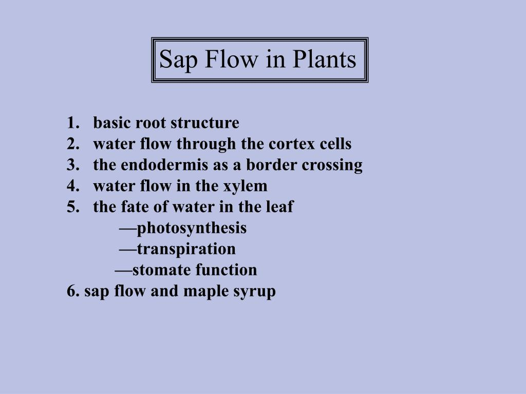 Sap Flow in Plants