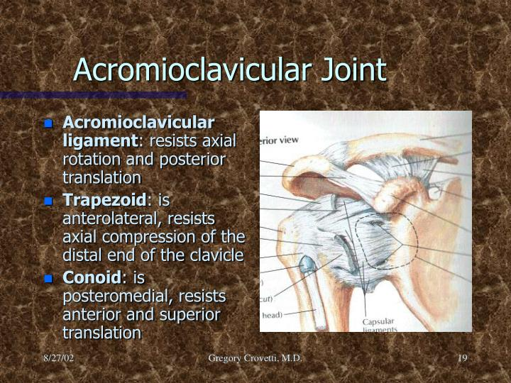 Acromioclavicular ligament