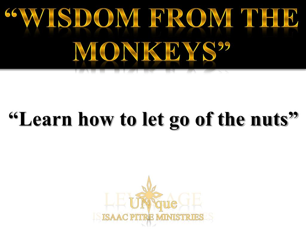 """Wisdom from the Monkeys"""