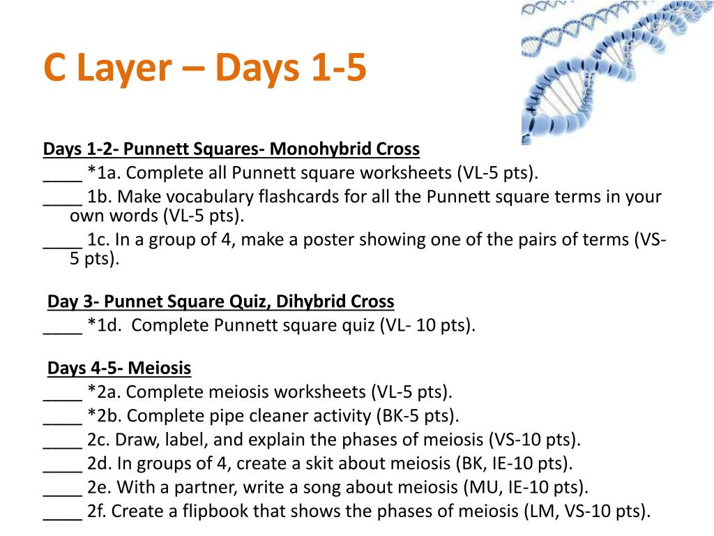 C Layer – Days 1-5