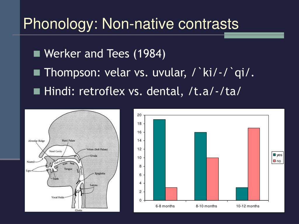 Phonology: Non-native contrasts