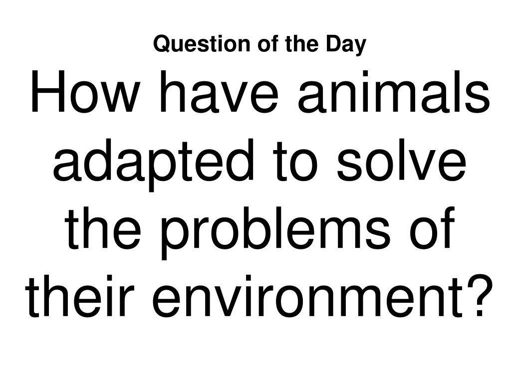 the problems of adaption to the Adaptation: adaptation, in biology, process by which an animal or plant species becomes fitted to its environment another problem in designating a trait as an adaptation is that the trait may be a necessary consequence, or constraint.