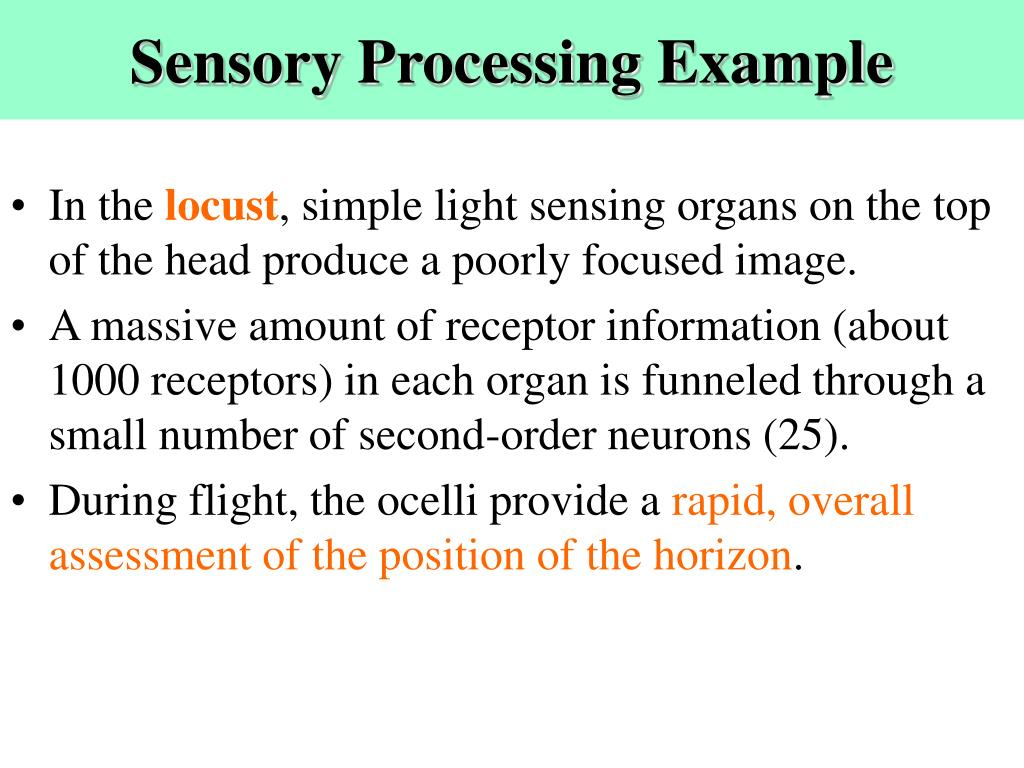 Sensory Processing Example