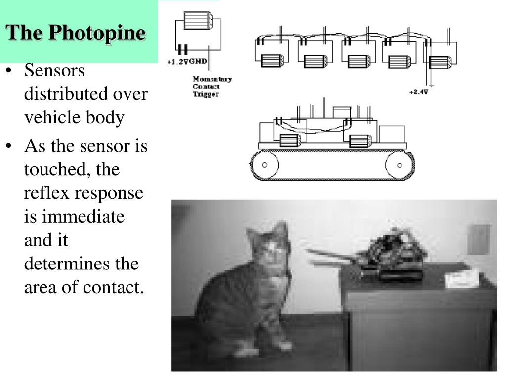 The Photopine