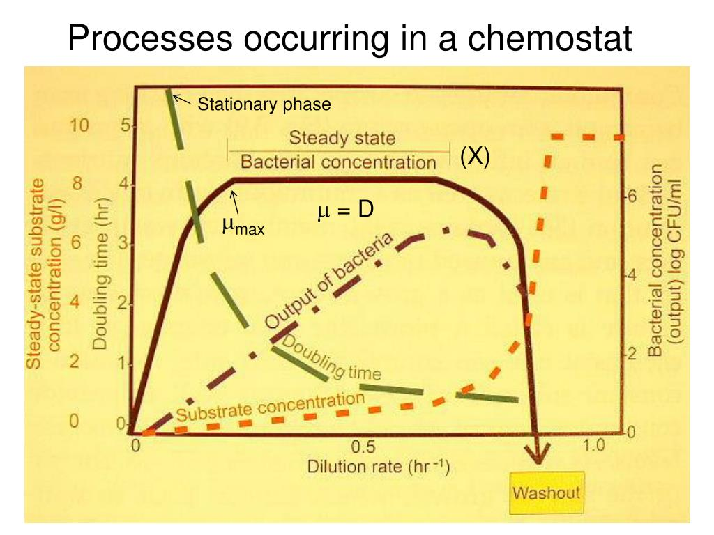 Processes occurring in a chemostat