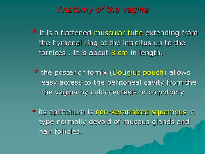 Anatomy of the vagina
