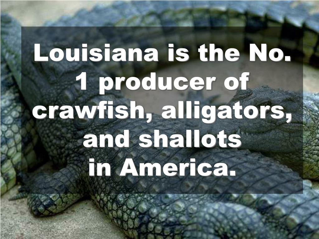 Louisiana is the No. 1 producer of crawfish, alligators, and shallots