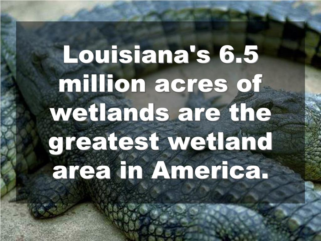 Louisiana's 6.5 million acres of wetlands are the greatest wetland area in America.