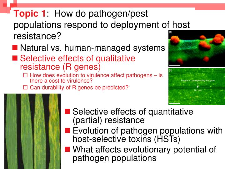 Topic 1 how do pathogen pest populations respond to deployment of host resistance