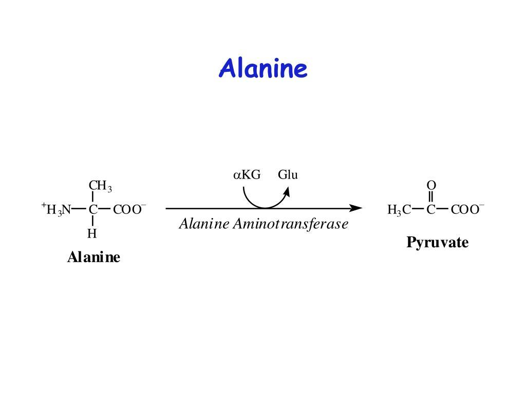 Alanine