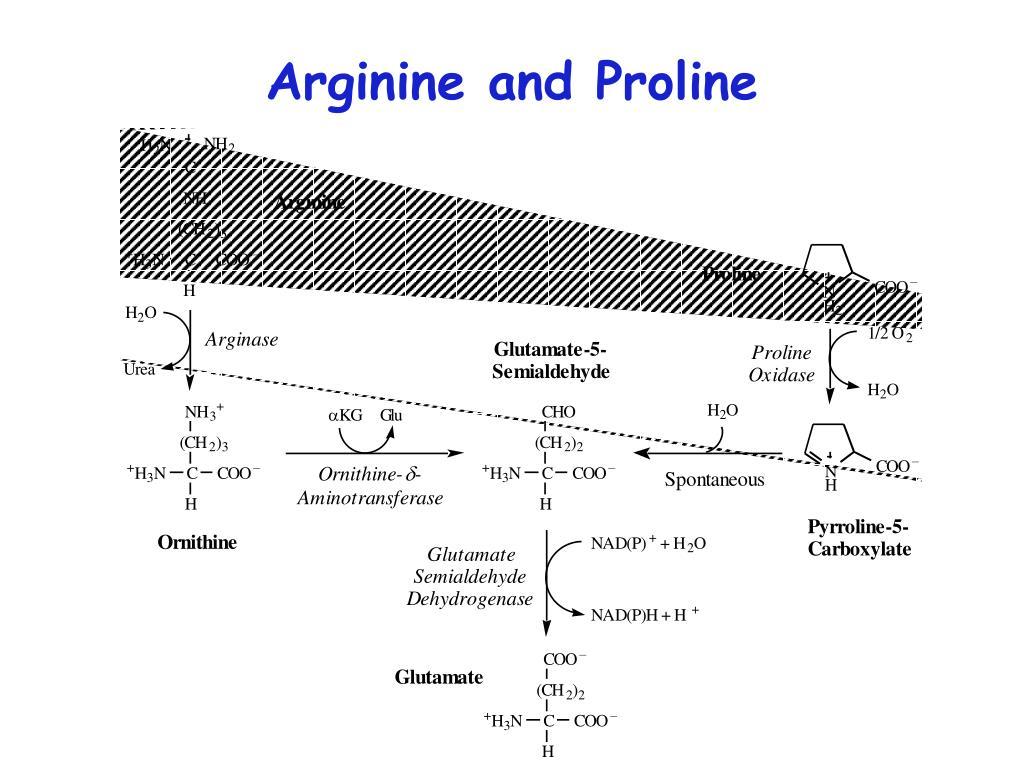 Arginine and Proline