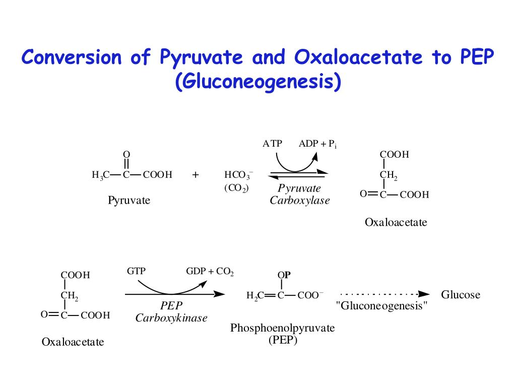 Conversion of Pyruvate and Oxaloacetate to PEP