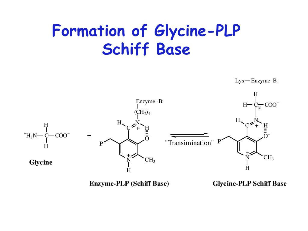 Formation of Glycine-PLP Schiff Base
