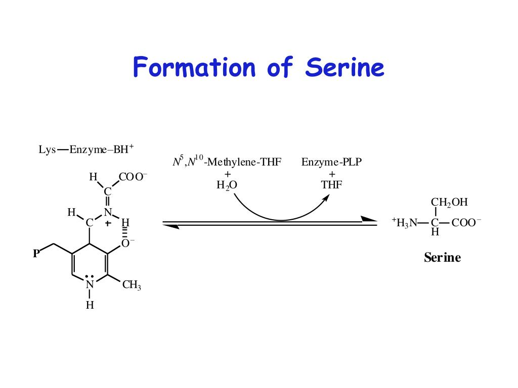 Formation of Serine