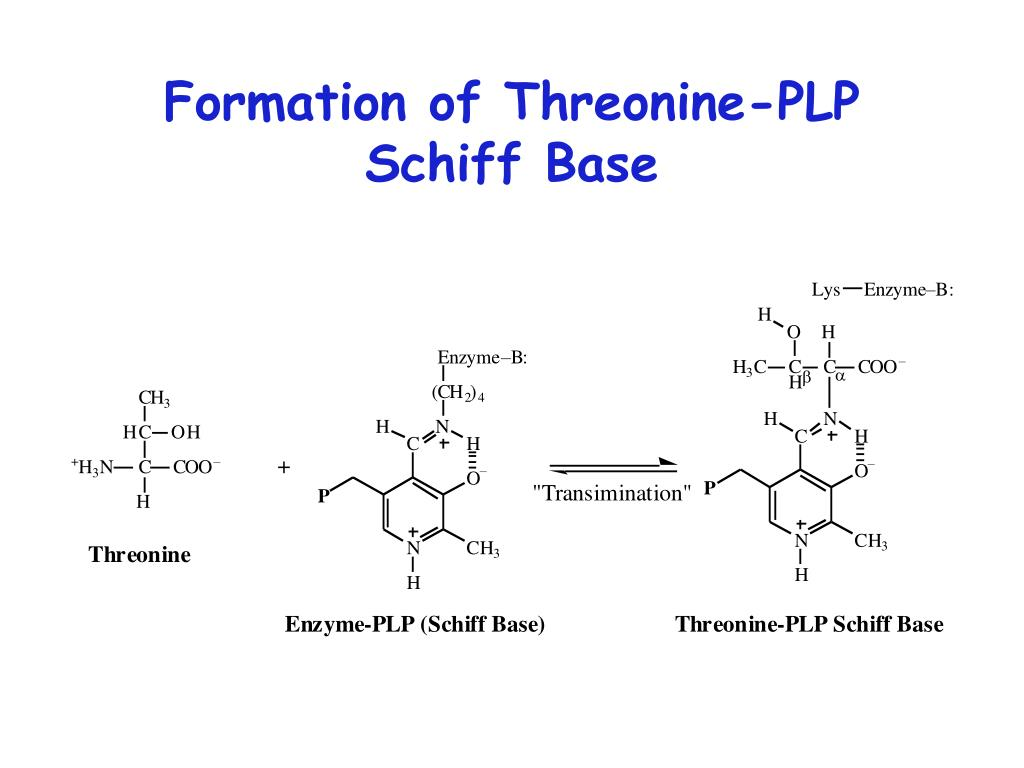 Formation of Threonine-PLP Schiff Base