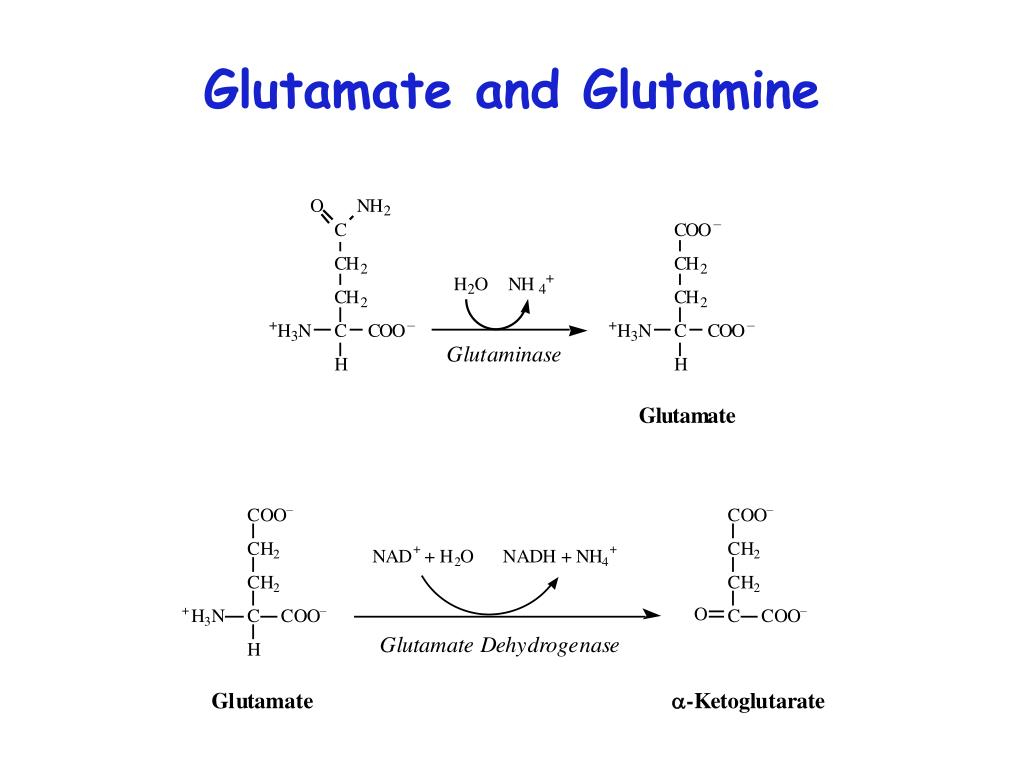 Glutamate and Glutamine