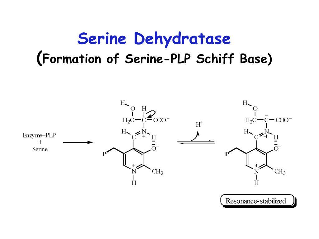 Serine Dehydratase