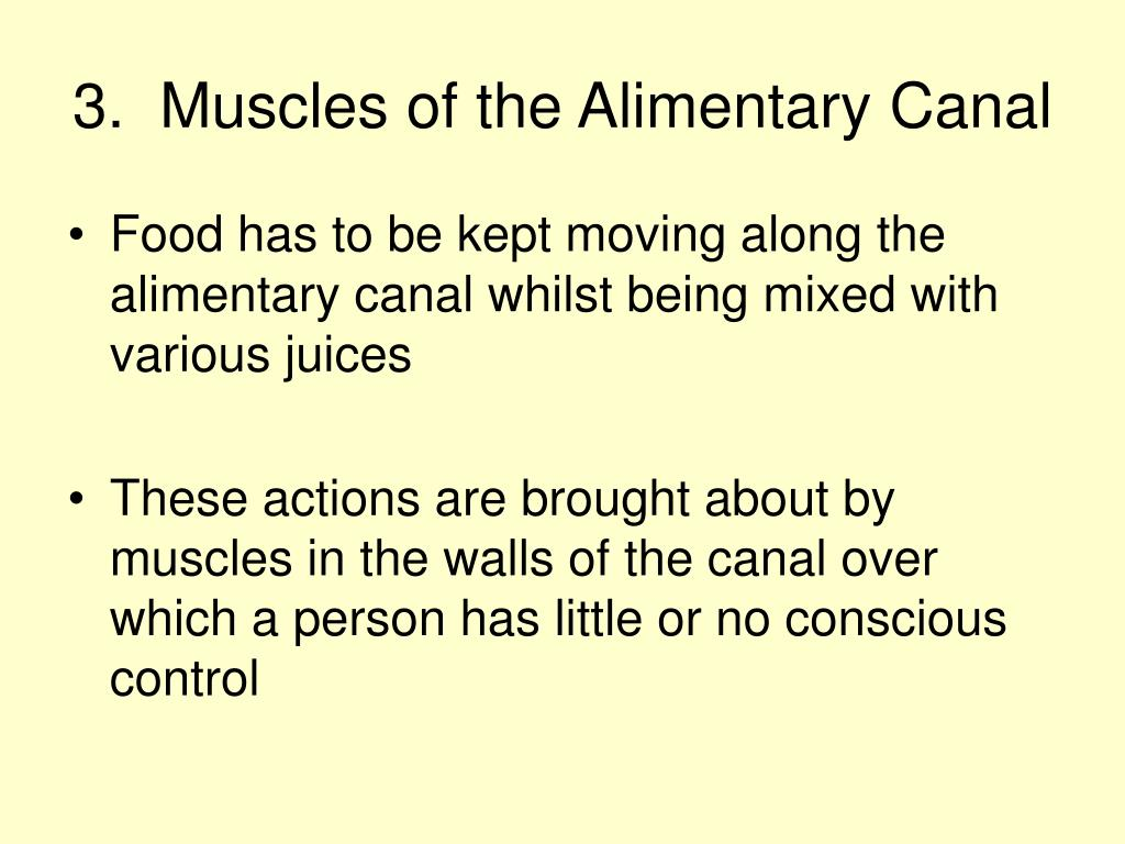 3.  Muscles of the Alimentary Canal