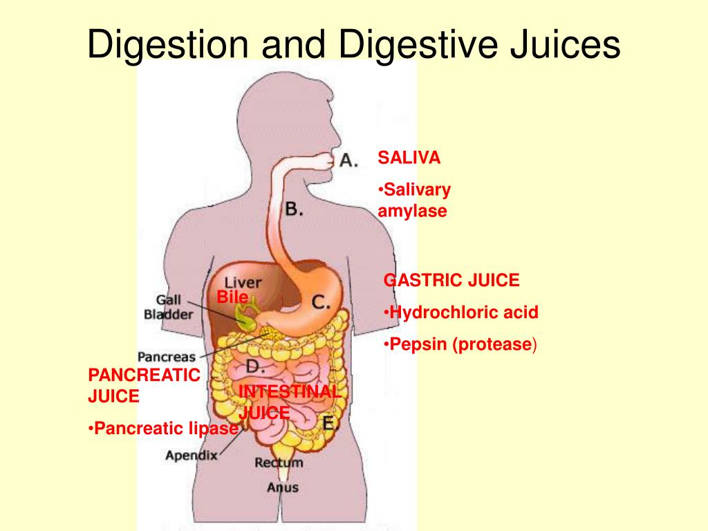 Digestion and Digestive Juices